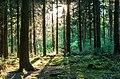 Haltern am See, Wald am Halterner Stausee -- 2014 -- 1144.jpg