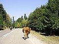 Han Pijesak - panoramio.jpg
