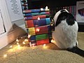 Harry Potter books with cat.jpg