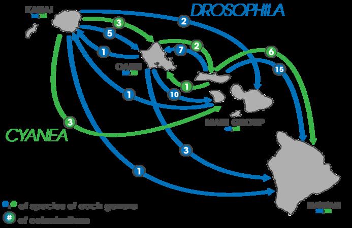 Hawaii speciation (Drosophila and Cyanea colonization).png