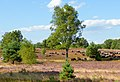Heide bei Wesel, Lüneburg Heath Nature Park.jpg