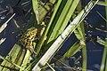 Hidden wildlife (23609790292).jpg