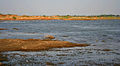 Himayat Sagar Lake with Common Coots in Hyderabad W IMG 8638.jpg