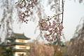Hirosaki Castle 弘前城 (2492837538).jpg