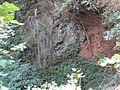 Hohnsberg alter steinbruch 08.jpg