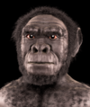 Homo habilis - forensic facial reconstruction.png