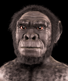 Reconstrucción de Homo habilis