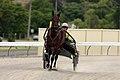 Horse Trotting (6700568707).jpg
