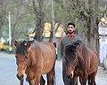 Horseman of Pahalgam.jpg