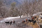 Horses on a forest cordon1.jpg