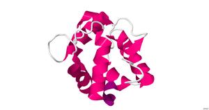 Parvalbumin - Image: Human alpha parvalbumin
