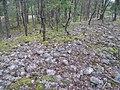 Hummelmoraberget, klapperstensvallar, 2015o.jpg