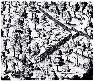 Economy of the Iroquois - Samuel de Champlain's sketch of a Huron deer hunt; Huron men make noise and drive animals along a V-shaped fence towards an apex where they are captured and killed.
