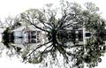 Hurricane Katrina Devastatingly Beautiful.png