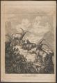 Ibex alpinus - 1865 - Print - Iconographia Zoologica - Special Collections University of Amsterdam - UBA01 IZ21300151.tif