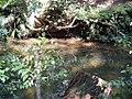Ibirapuera Park (20533892).jpg