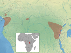 Idiurus zenkeri distribution (colored).png