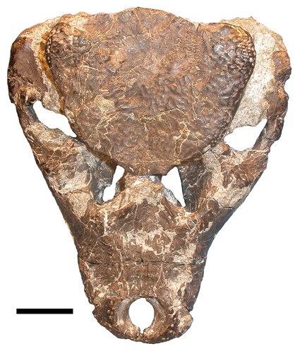 Iharkutosuchus