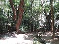 Ikuta Shrine - panoramio (3).jpg