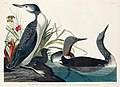 Illustration from Birds of America (1827) by John James Audubon, digitally enhanced by rawpixel-com 202.jpg