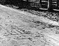 Imprints of the horses' hoofs in the Warrenite pavement during the construction of the Bothell Road, Washington, May 8, 1912 (INDOCC 12).jpg