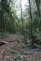 In Scadson Wood - geograph.org.uk - 1015743.jpg