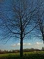 In der Oeverscheidt, Dortmund-Oespel, 20.12.13 - panoramio (8).jpg