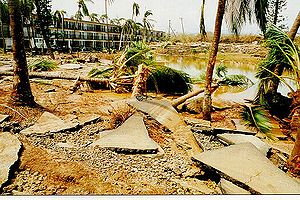 Hurricane Iniki - Sidewalk and tree damage from Iniki