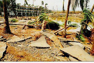 Hurricane Iniki - Sidewalk and tree damage from Iniki