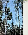 Insect and disease conditions in the United States, 1979-83 - what else is growing in our forests? (1985) (20579896991).jpg