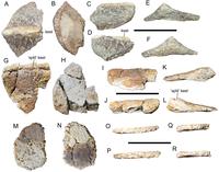 Invictarx zephyri holotype PeerJ e5435 fig 4.png