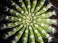 "Iran-qom-Cactus-The greenhouse of the thorn world گلخانه کاکتوس ""دنیای خار"" در روستای مبارک آباد قم- ایران 40.jpg"
