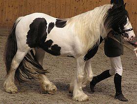 Irish Tinker horse.JPG