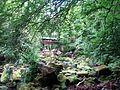 Irrel Wasserfälle 19+ Erle.jpg