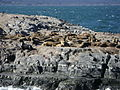 Isla de los Lobos. Beagle.JPG