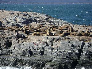 Ushuaia - Isla de los Lobos.