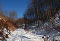 Jablanik - zapadna Srbija - Na putu sa Debelog brda ka mestu Pašna ravan 6.JPG
