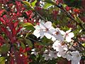 Japanese nature flowers red and white.jpg