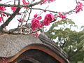 Japanese nature temple red flowers.jpg