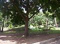 Jardin botanico medellin 1.JPG
