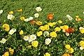 Jardin des plantes en fleurs à Paris le 3 avril 2017 - 12.jpg