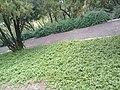 Jardines del Cerro de las Campanas en Querétaro 02.jpg