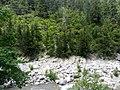 Jeep safari Kemer - Gedelme - Ovachik - panoramio (3).jpg
