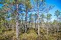 Jersikas pagasts, Latvia - panoramio (11).jpg