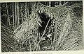 Jungle trails and jungle people - travel, adventure and abservation in the Far East (1905) (14593516157).jpg
