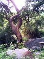 Jungles of Sariska Tiger Reserve.jpg