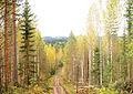 Jyväskylä - dirt road.jpg