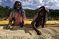 Kaffeodlare i Etiopien.jpg
