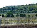 Kallstadt vinyard wires2.jpg