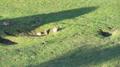 Kaninchen Familie Verhalten 1.png